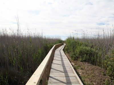 Boardwalks lead into the sensitive wetland area