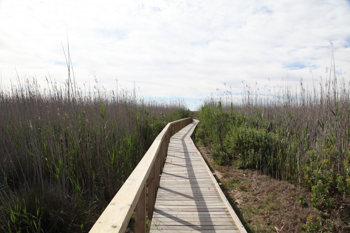 Boardwalks lead into the sensitive wetland area