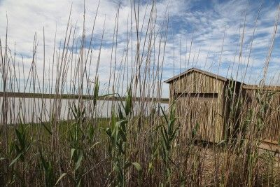 Bird hides nestle in the reeds along the edge of the seasonal wetland