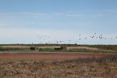 Bird hides provide close encounters with the variety of birds which migrate along the West coast